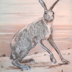 hare-in-winter