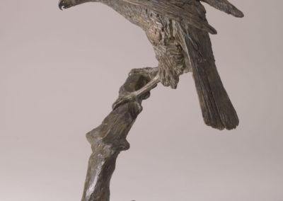 Bronze scupture of Sparrow Hawk by Philip Blacker